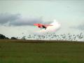 Schwarmfliegen2
