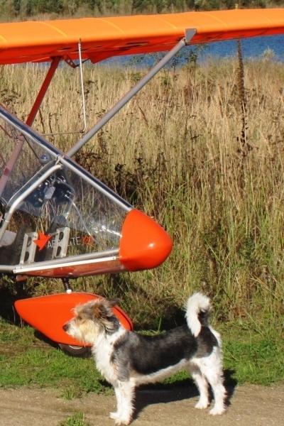 Hund-mit-Flugzeug