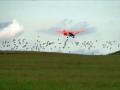 Schwarmfliegen