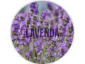 Edition Lavenda